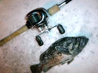 これが今年初の魚だ!焦